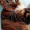 Enola, Chat à adopter