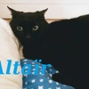 Altaïr de minuit, Chat gouttière à adopter