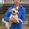 Shrek, Chien jack russell terrier à adopter