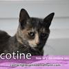 Bricotine de puiseaux, Chat à adopter