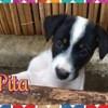 Pita, Chiot à adopter
