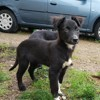 Jazzy, Chiot à adopter