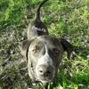 Omara, Chiot à adopter