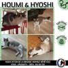 Houmi et hyoshi, Chat européen à adopter