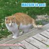 Macsen, Chat à adopter