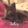 Jules, Chaton à adopter