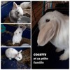 Cosette et sa petite famille, Animal à adopter