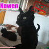 Nawen, Chat à adopter