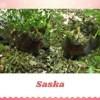 Saska, Chat à adopter