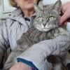 Feline très douce, Chat à adopter