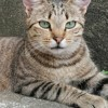 Mamounette, Chat à adopter
