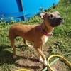 Stella, Chien à adopter