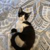 Phoebe, Chaton à adopter
