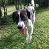 River, jeune chien croisé non lof, Chien à adopter