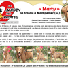 Marty, Chiot berger belge, golden retriever à adopter