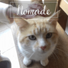 Nomade, Chat à adopter