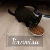 Tiramisu, Chat à adopter