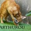 Arthurou chasse les souris, Chat à adopter