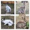 Poli et nina, Animal à adopter