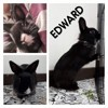 Edward, Animal à adopter