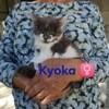 Kyoka, Chaton à adopter