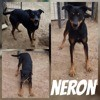 Néron, Chien à adopter