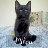Milou, Chaton à adopter
