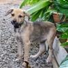 Hela, Chiot à adopter