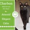 Charbon, Chat gouttière à adopter