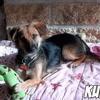 Kuba, Chien à adopter