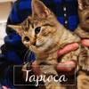 Tapioca, Chaton à adopter