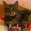 Kouby, Chat à adopter