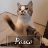 Pasco, Chaton à adopter