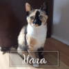 Hara, Chat à adopter