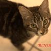 Bindi et lhassa, Chaton à adopter