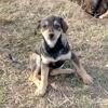 Ambra, Chiot à adopter