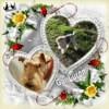 Gai luron, Chien fox-terrier à adopter