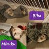 Biba et miruku, Animal à adopter