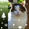 Neko calin et joueur, Chat à adopter