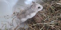 Lumba, Animal à adopter