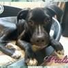 Praline, Chiot à adopter