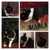 Bianca, Animal à adopter