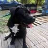 Axx, chien mâle croisé, Chien à adopter