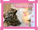 Valentin cherche valentine, Chat à adopter