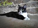 Oréo, Chat à adopter
