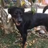 Nala, Chiot à adopter