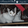 Marcus et chase, Chaton à adopter