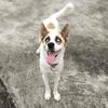 Oméga, Chien à adopter