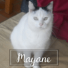 Mayane, Chat à adopter