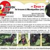 Zeus, Chiot berger allemand, beauceron à adopter